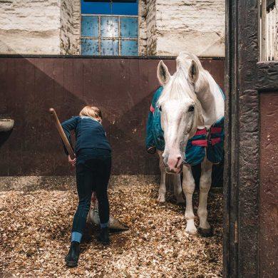 Accommodaties waar paarden welkom zijn