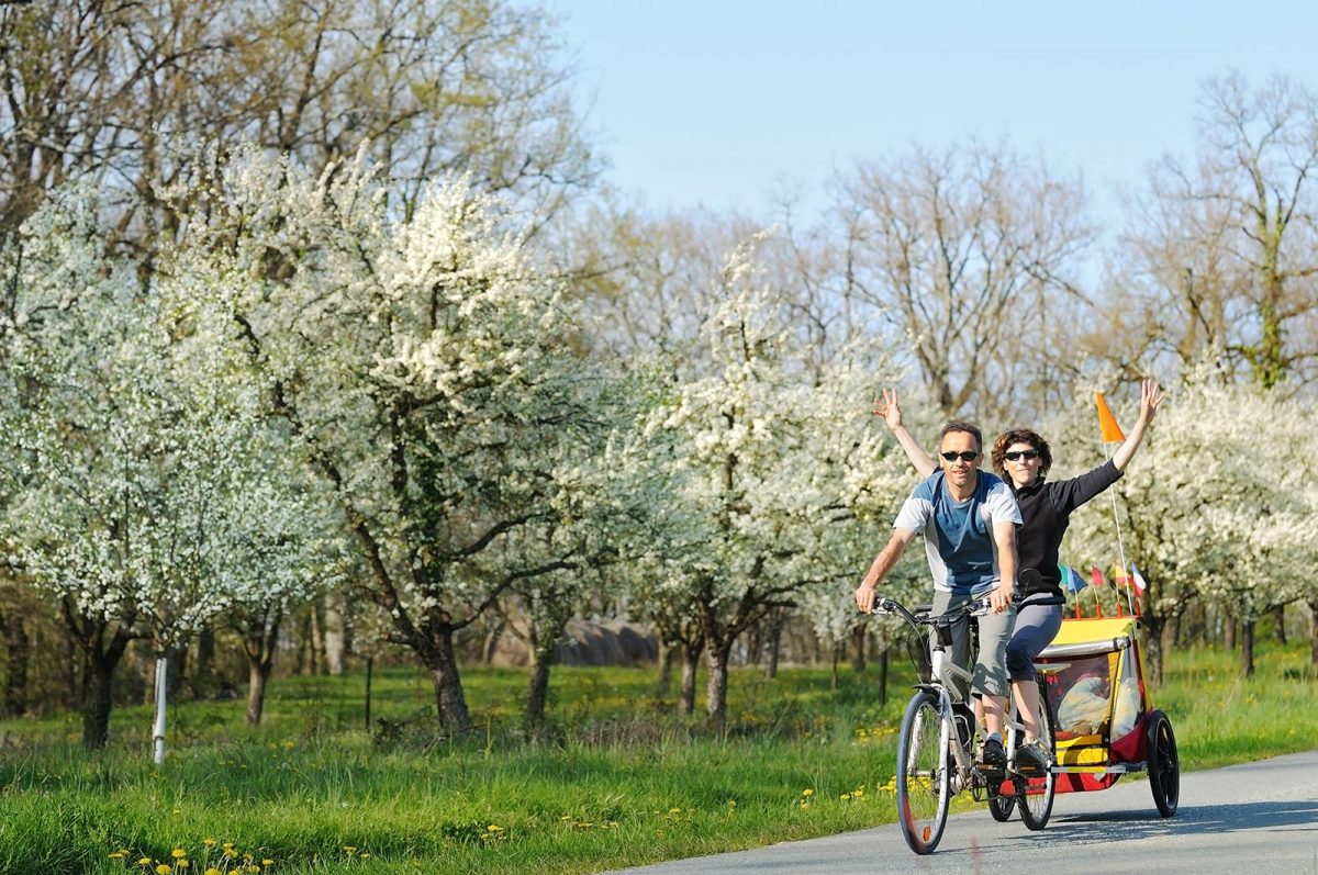 couple à vélo le long des pommiers en fleurs